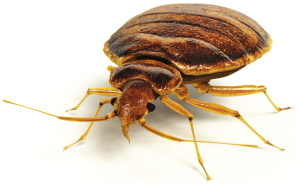do away with bed bugs